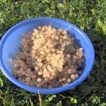 ekofarma-slunicko03-miskarybizu